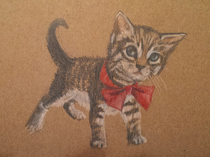 Cardboard Kitty!
