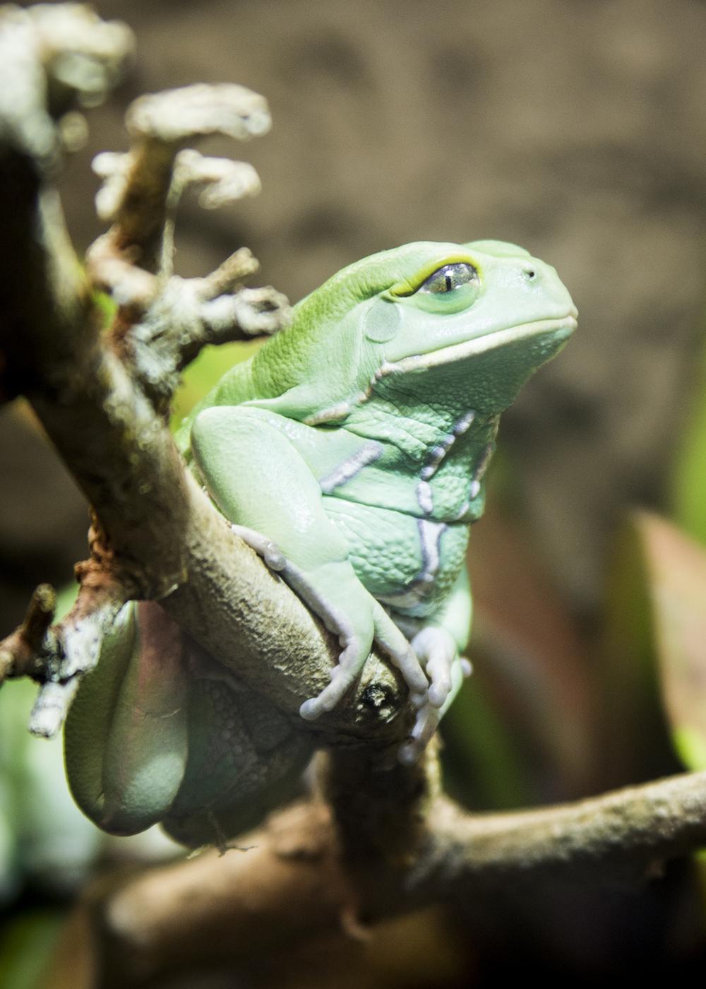 frog 5x7.jpg