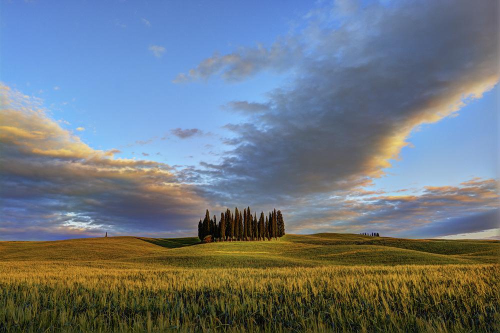 cypress-in-tuscany-eleonora-bandini.jpg