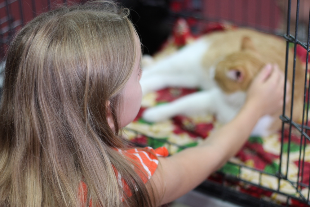 Here is a little girl bonding with the two cats. She wanted a feline friend so badly and spent hours petting them and doing a lot of hoping. As a responsible parent, her mother promised to talk with the rest of the family about the possibility of adopting a kitten in the near future.