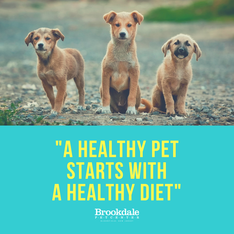 Healthy Pet Starts with Healthy Diet.png