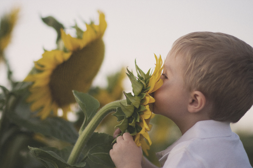 Sunflowers, Smelling the Flowers, Kids Photo