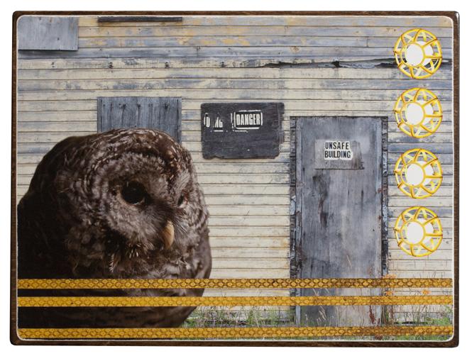Owl Detective