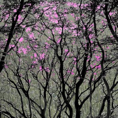 Woodland Springtime view gallery >>
