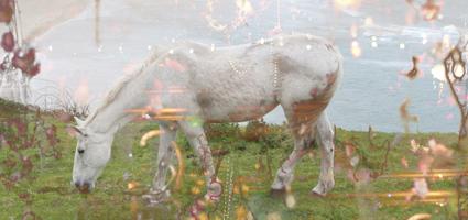 HorseDreams_clip.jpg