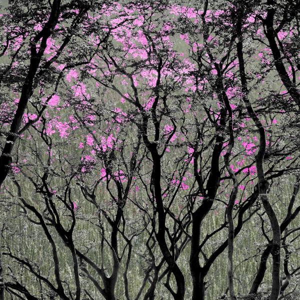 Woodland Springtime  >> view gallery