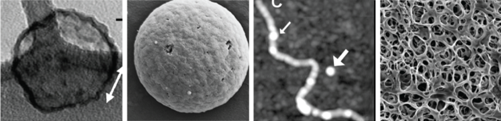 Diverse morphologies of processed silk. [Left to Right] A) Silk Elastin Nanoparticle. B) PVA silk microparticle. C) AFM micrograph of dragline spider nanofiber.D) SEM micrograph of a pH induced B.Mori hydrogel.