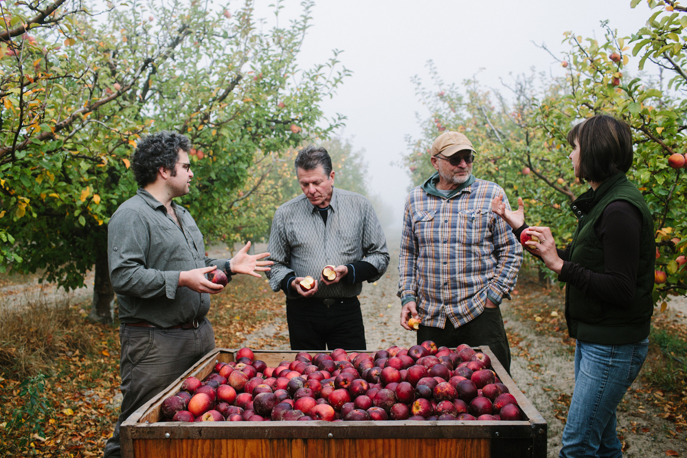 "Bite Club Eats ""Devoto Family Pleads for Land to Plant Heirloom Apples"" by Biteclub"