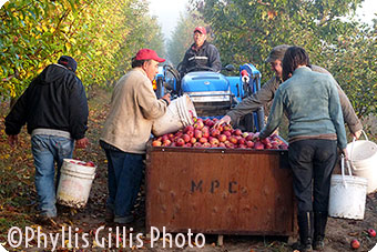 "FoodPaths, Inc. Magazine ""Devoto Orchards Artisan Cider"" by Phyllis Gillis"