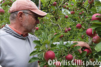 "FoodPaths, Inc. Magazine ""Riding with the Artisan Apple King"" by Phyllis Gillis"