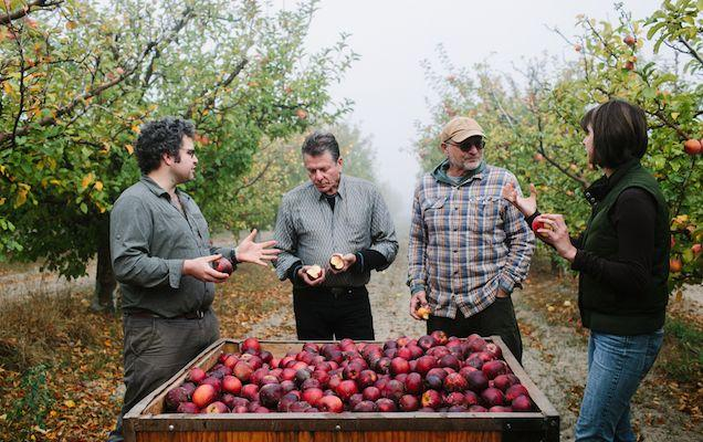 "SF Weekly ""At Devoto Cider, the Apple Doesn't Fall Far From the Tree"" by Lou Bustamante"