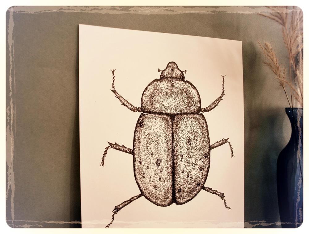Eastern Hercules Beetle (Female) - Dynastes tityus