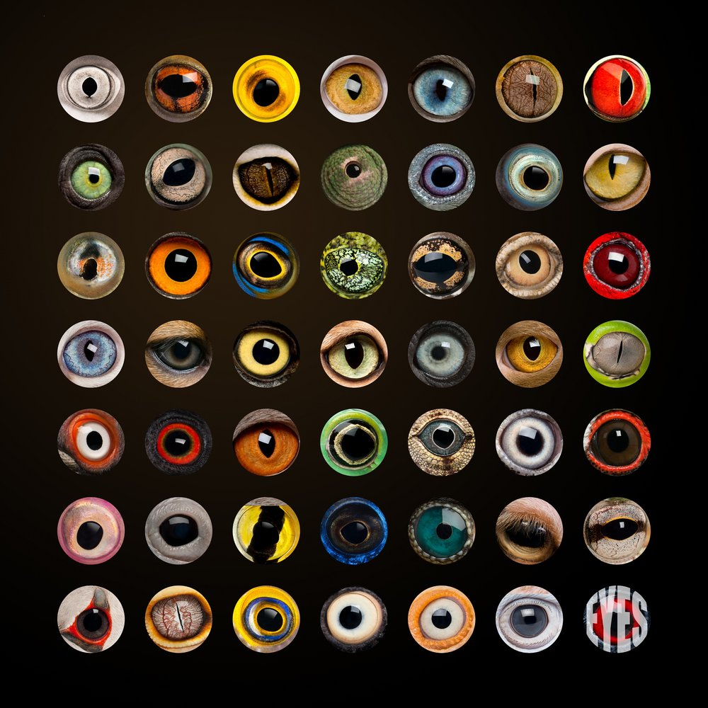 Collection of animal eye images; reference for the eye field