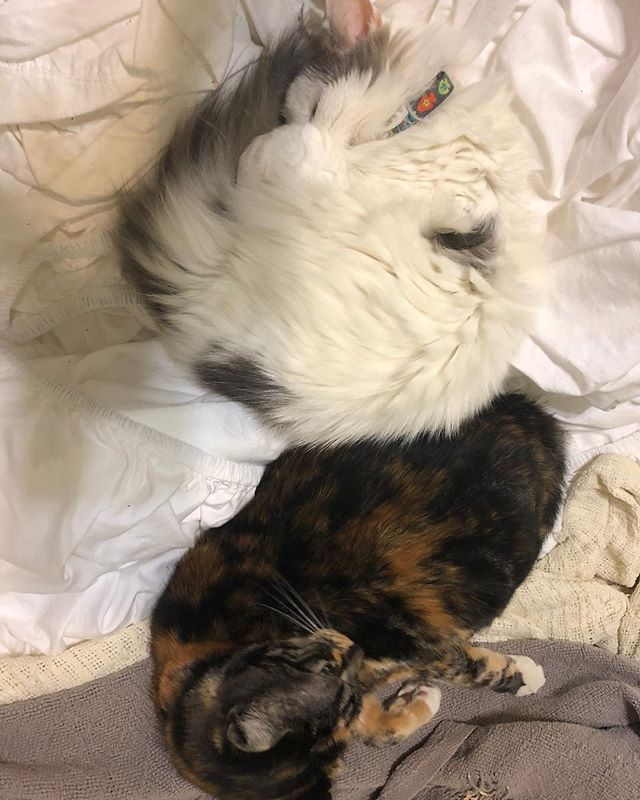 Our 19 year old #kitty and 1 year old calico. Finally. They trust each other. #cat #catsofinstagram #atlanta #eastatlanta #atl