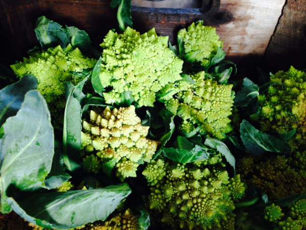 Thursday Box has the addition of Romanesco Cauliflower