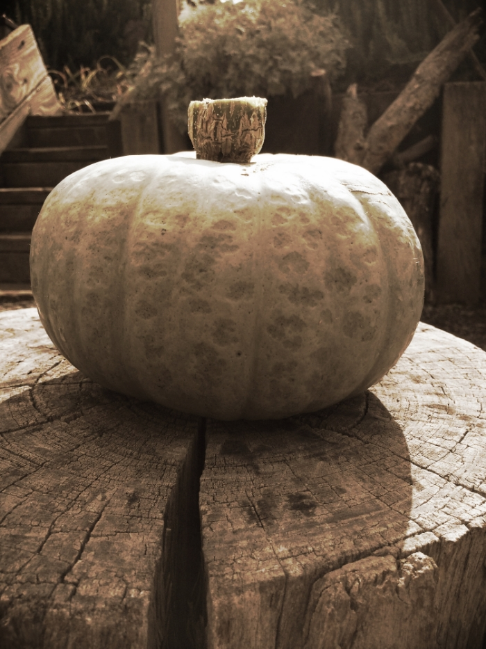 a pumpkin recipe