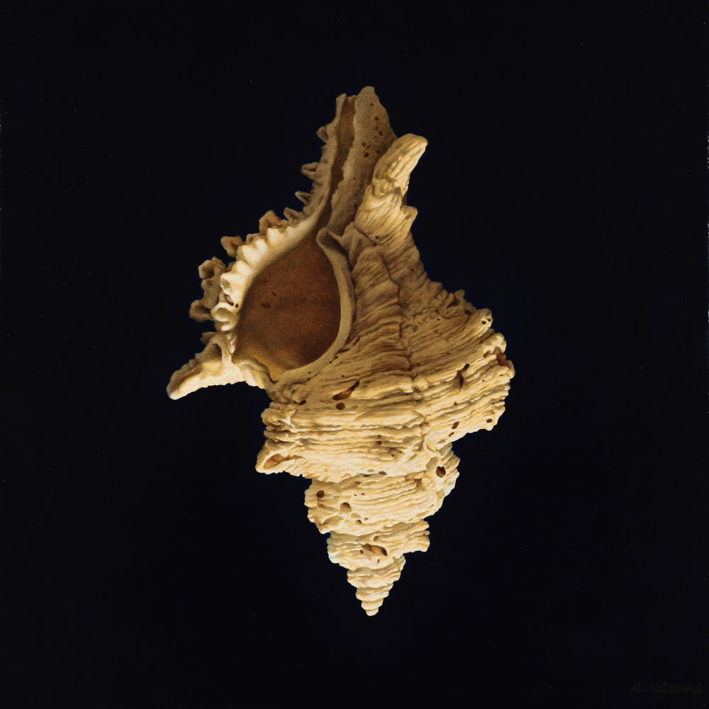 Anthony Cazorla  |   Spiral 1   |  Oil on canvas  |  9 ½ x 9 ½ inches or 24 x 24 cm
