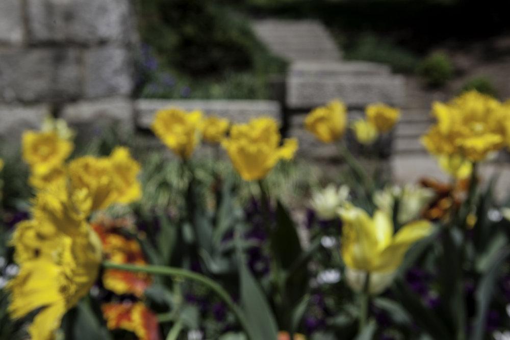 Maymont Blooming