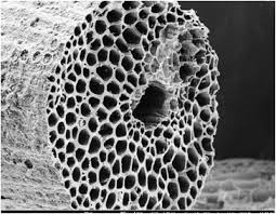 close up of the microscopic pores in activated charcoal. these pores absorb toxins, dirt, oils, etc.