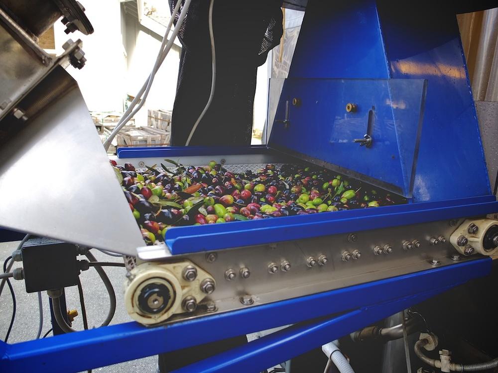 harvest2012 15.jpg