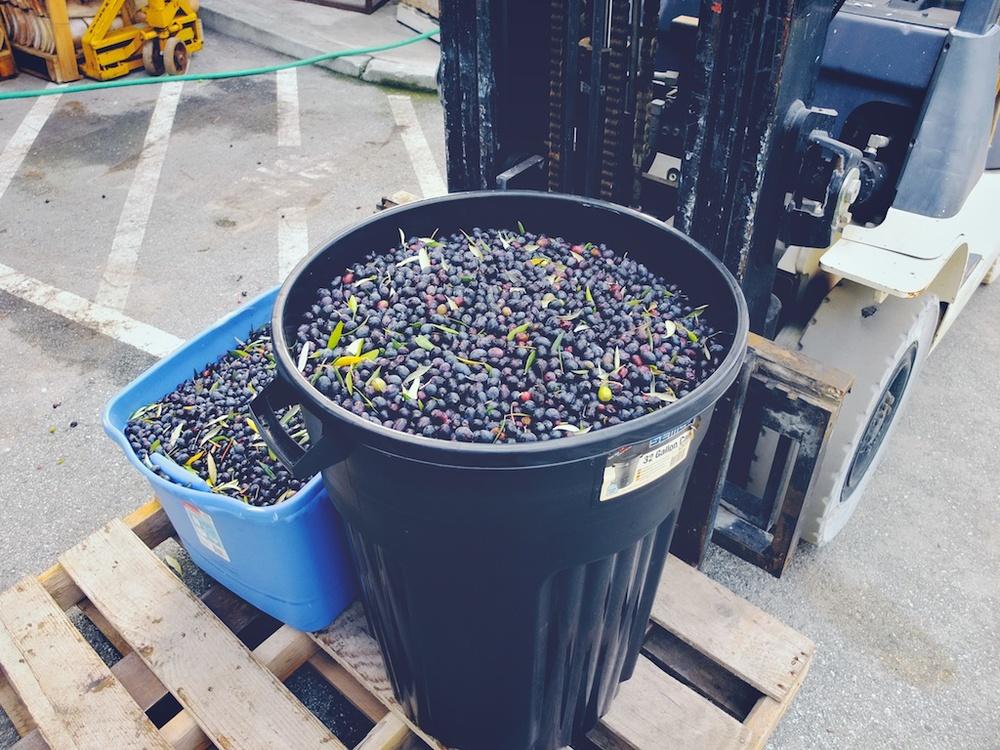 harvest2012 20.jpg