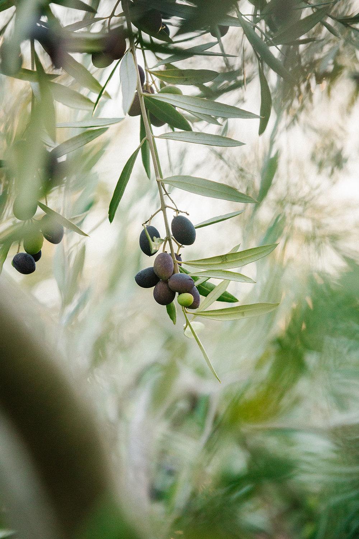 harvestday45_web.jpg
