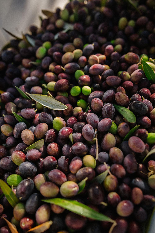 harvestday57_web.jpg