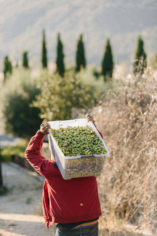 harvestday61_web.jpg