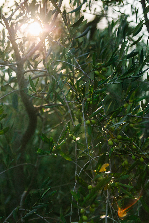harvestday66_web.jpg