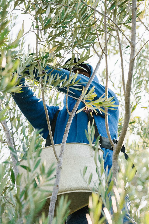 harvestday78_web.jpg
