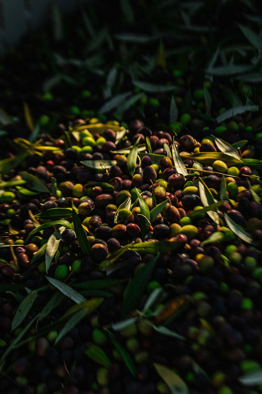 harvestday82_web.jpg