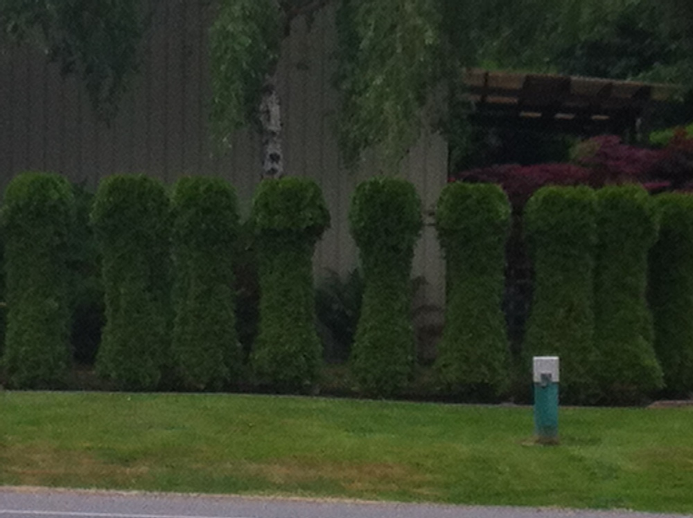 Interesting hedge design :)