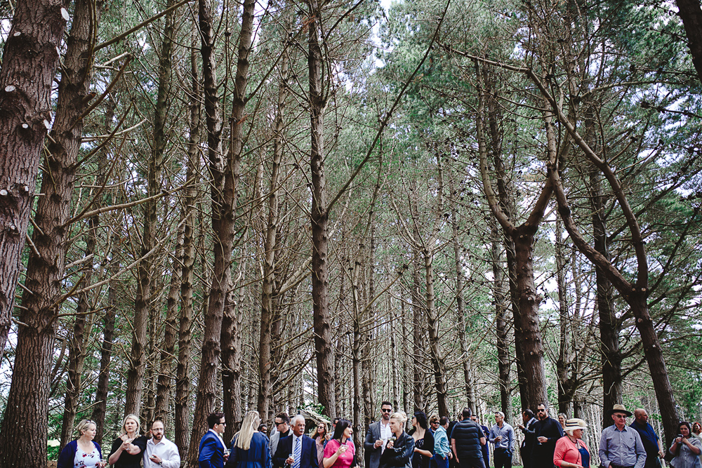 042-waimauku-wedding-photographer--woodland-wedding--farm-wedding.jpg
