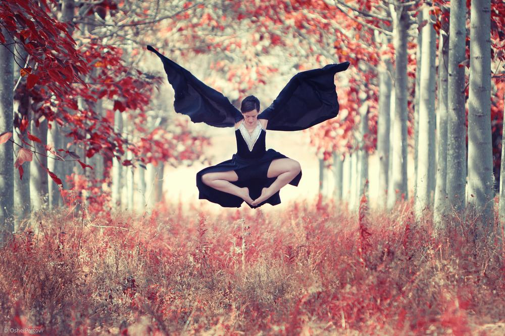 parvoti-bat forest.jpg