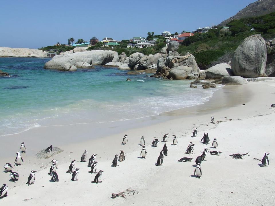 SouthAfrica4.jpg