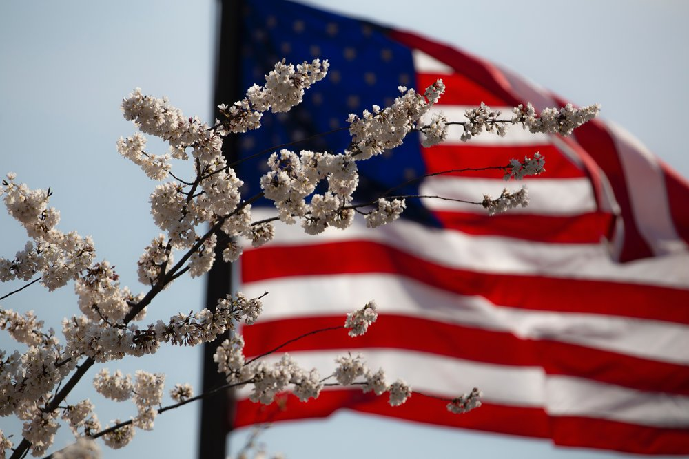 american-flag-flower-july-4th-1093645.jpg