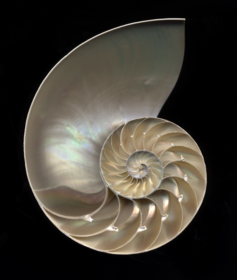 Split Nautilus No. 1