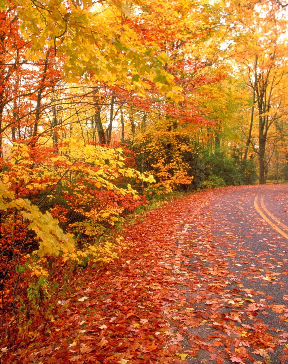 New-England-Fall.jpg