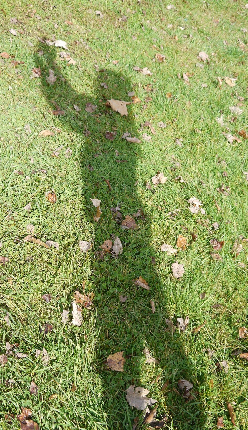 shadow praise 2.jpg