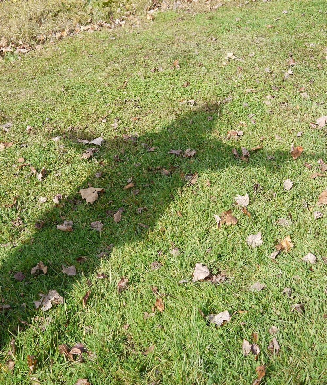 shadow praise 4.jpg