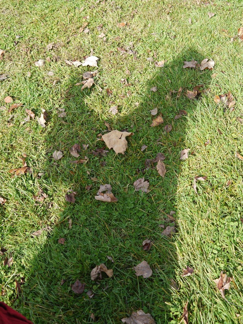 shadow praise 3.jpg