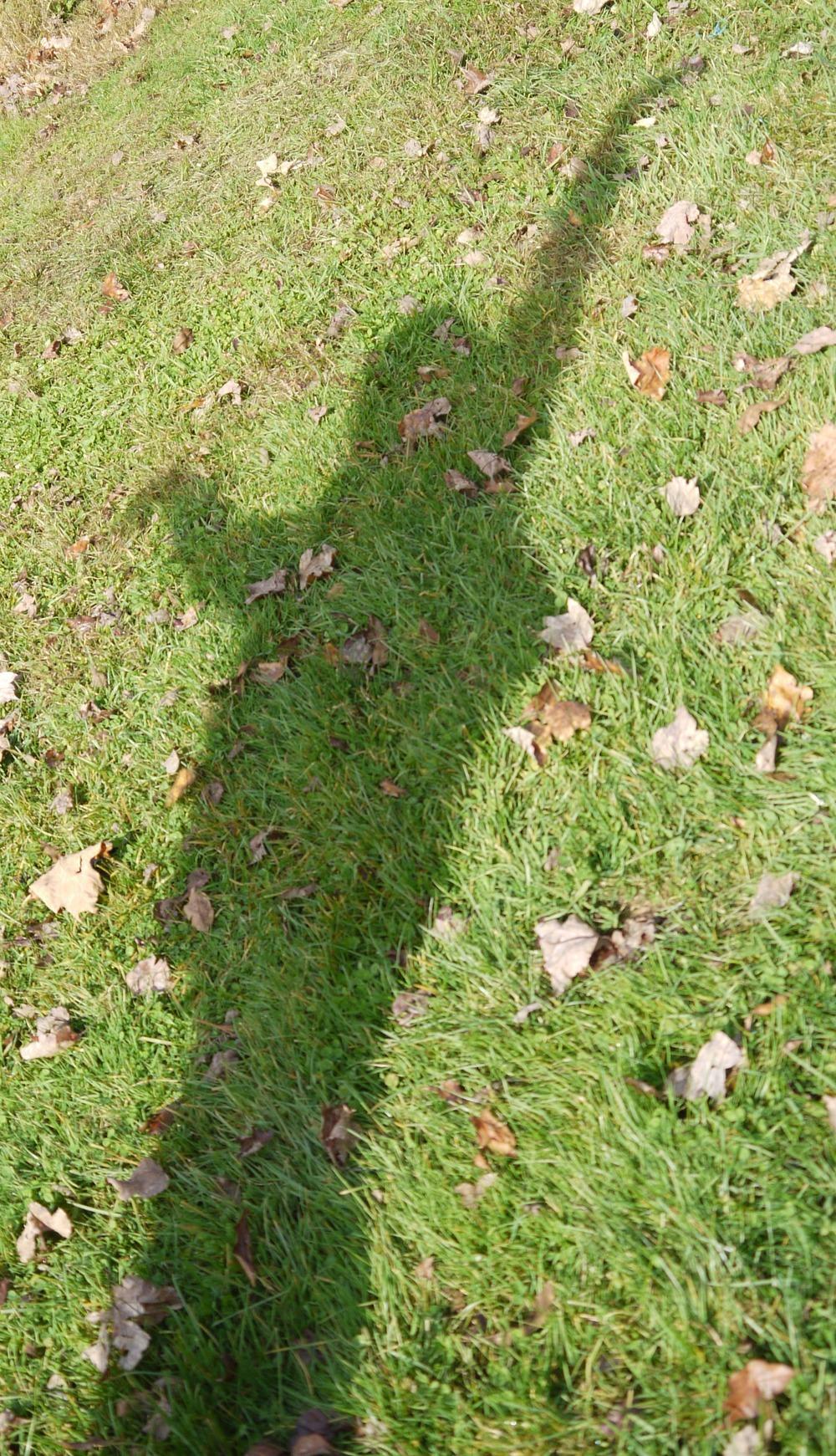 shadow praise 5.jpg