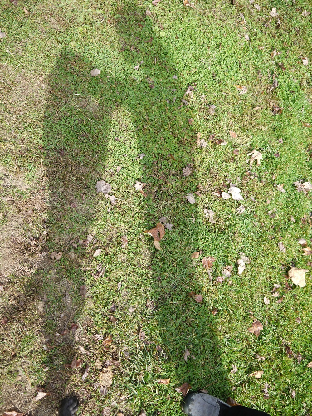 shadows2.jpg