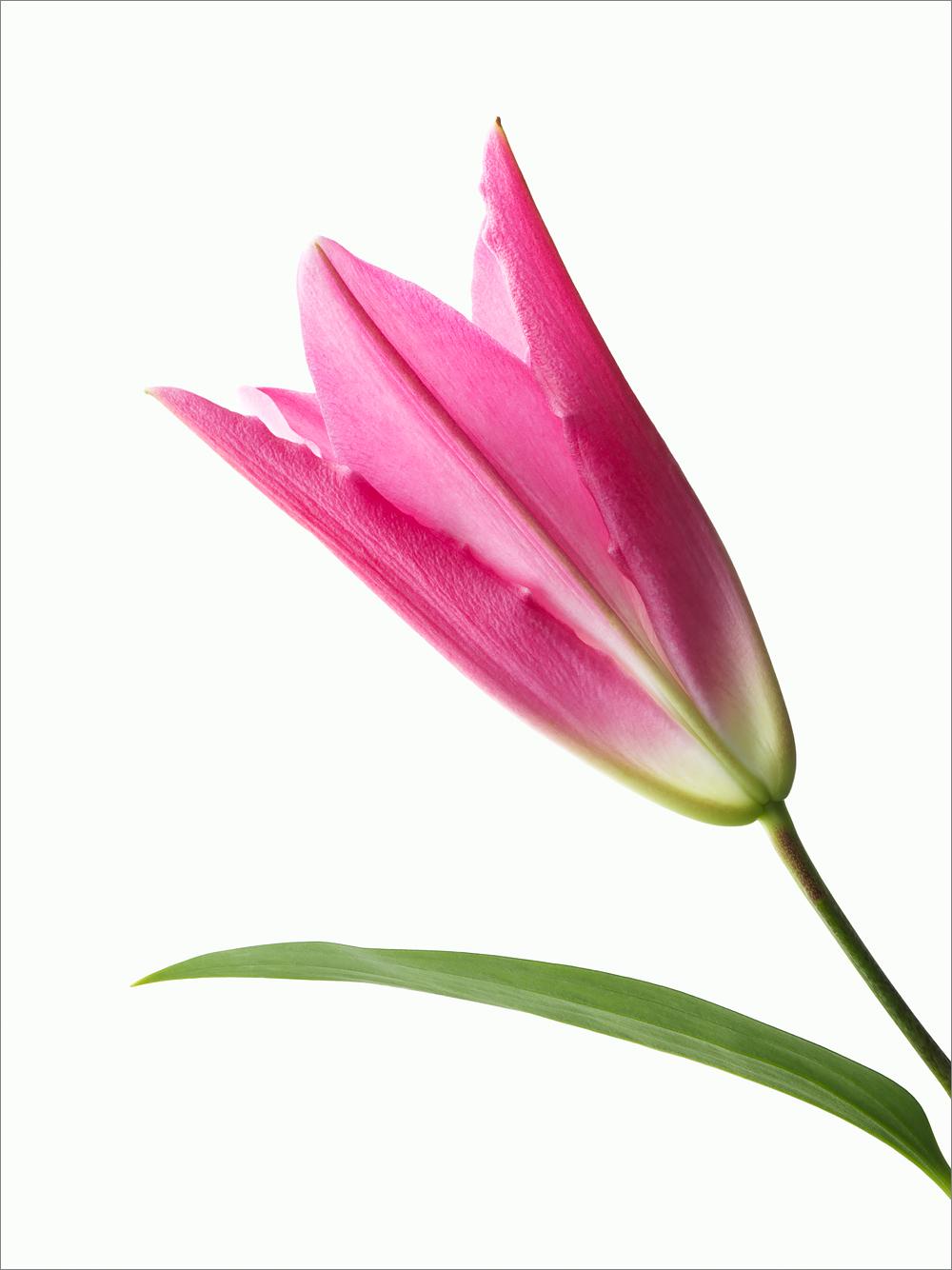 vegafoto-prinsgatans-blomsteraffär-3.jpg