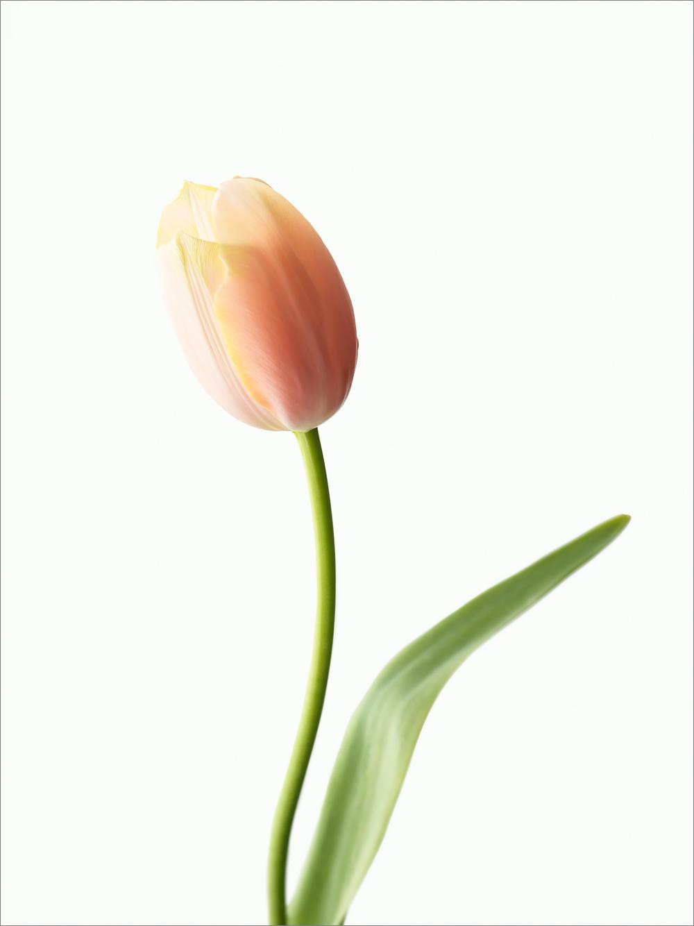 vegafoto-prinsgatans-blomsteraffär-1.jpg