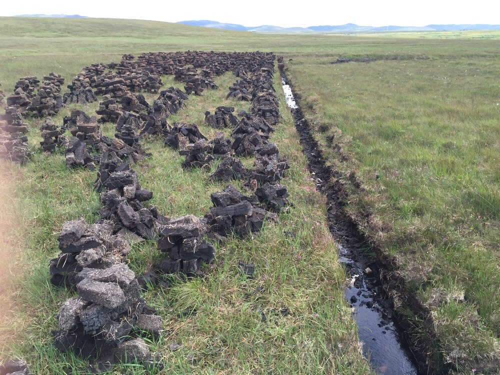 Fresh Islay Peat