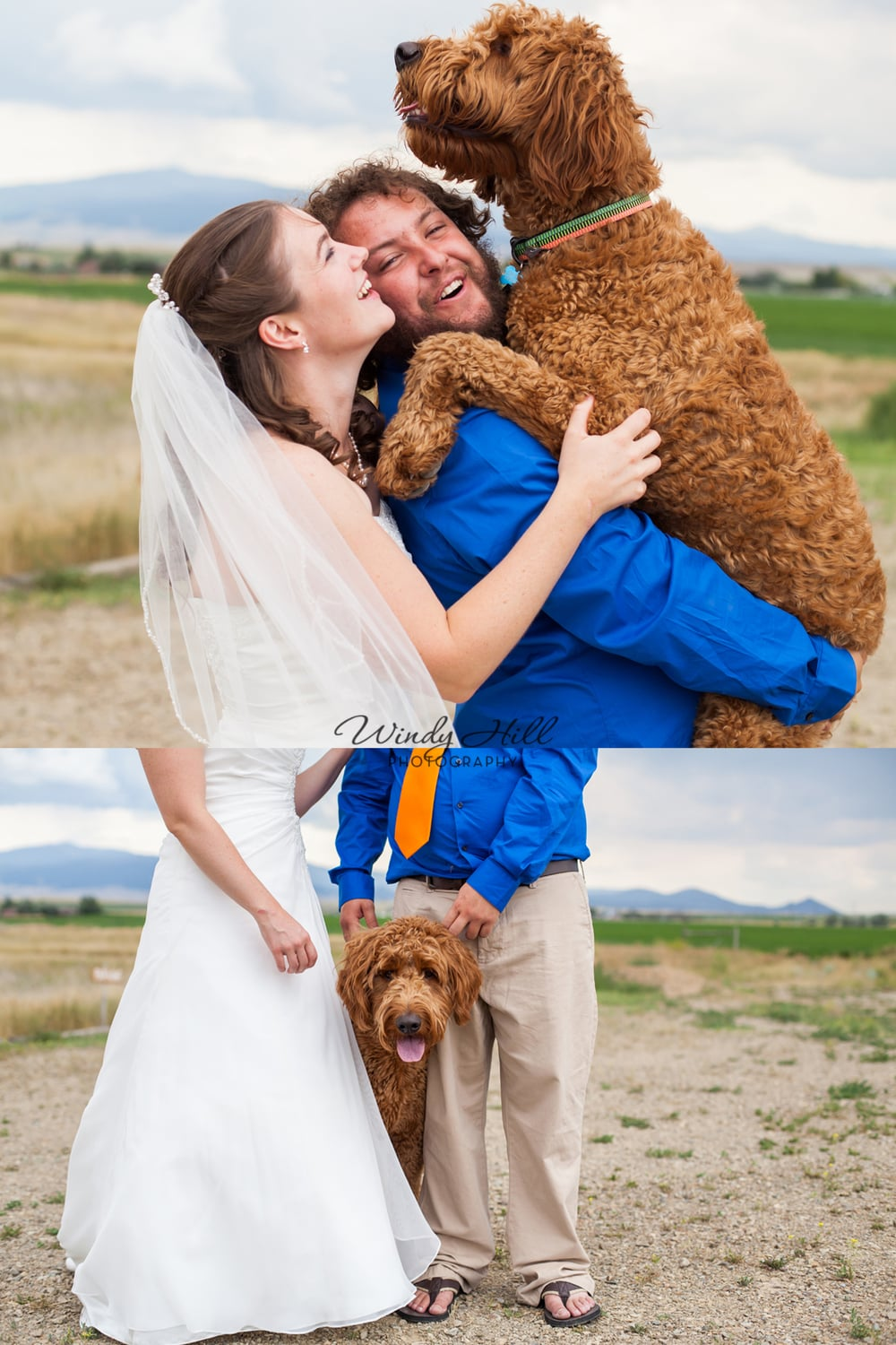 Remember that time Paul and I flew to MT for the wedding of Jake and Nicole? This is Riley, their adorable goldendoodle  who was SO happy to see them after the ceremony!