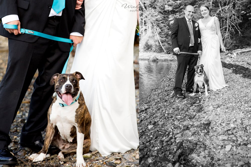 This lovely lady had recently been adopted and needed a bit of alone time before and after the ceremony but she sure did great during our photos! I love that her leash and collar matched the wedding colors and the grooms tie. :)