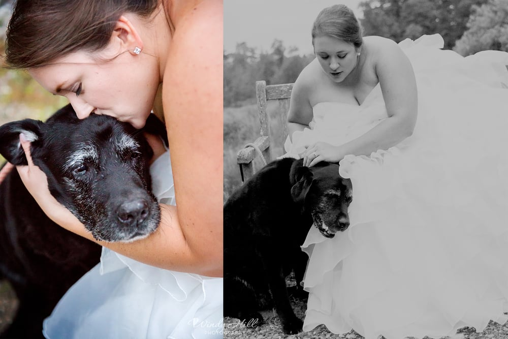 Last but not least this lovely lady, whose name escapes me right now but who was the sweetest old timer, black lab ever! Her girl(Anna the bride) now lives clear across the country and this was likely the last time Anna was going to see her. I teared up taking these photos, the love between she and Anna was so sweet and strong and beautiful!