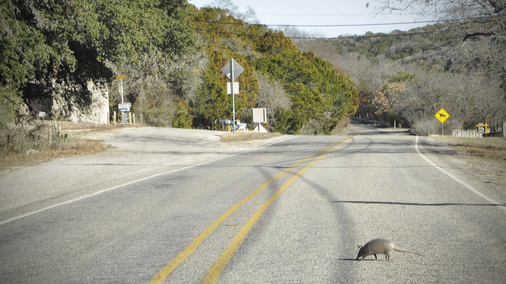 no armadillos were harmed in the creation of this blog post